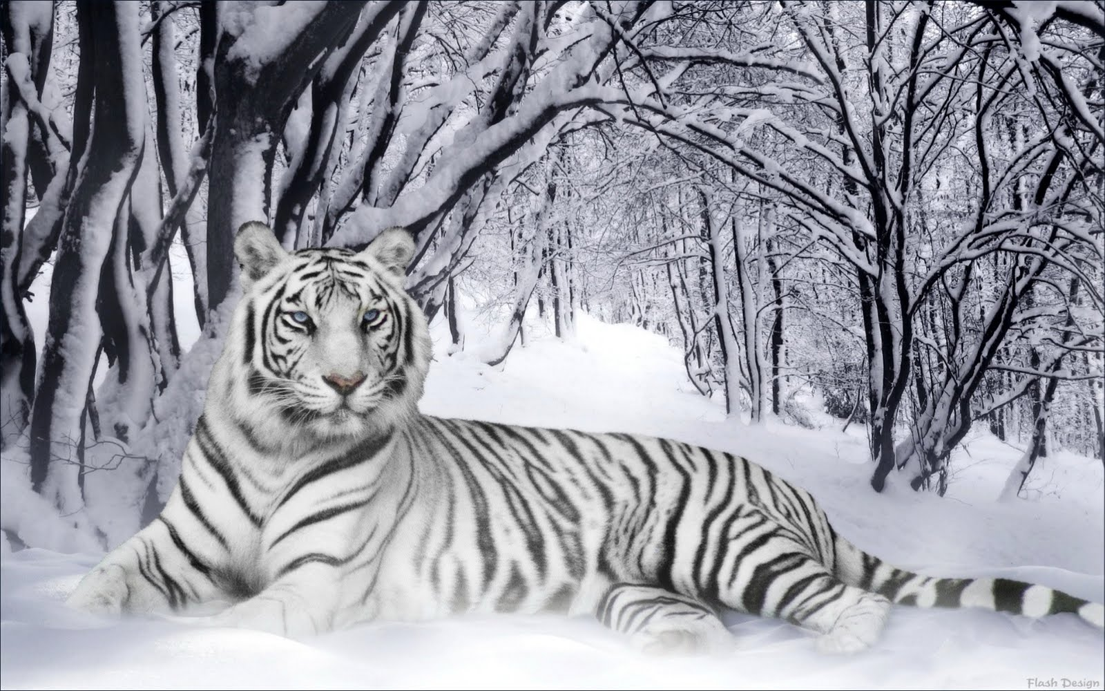 http://4.bp.blogspot.com/-Ck3h9uKgrMM/Th5FIGP7yFI/AAAAAAAAAAo/yJpjs9fqVfc/s1600/897-animals_tiger_white_tiger_wallpaper.jpg