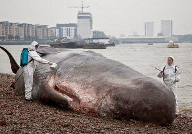 Unusually realistic sculpture of Spermwhale by Captain Boomer