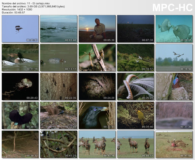 44GB|BBC|La Vida a Prueba|12-12|BDR 1080p|MEGA|Taykun7000