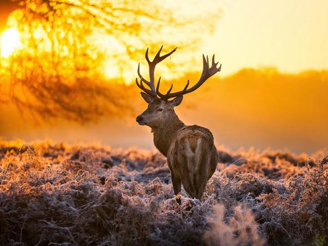 """<img src=""""http://4.bp.blogspot.com/-Ckdjg3PuXr8/Uq8Jzmz0M8I/AAAAAAAAFlI/X1WdRWr-N8k/s1600/fsfdd.jpeg"""" alt=""""Deer wallpapers"""" />"""