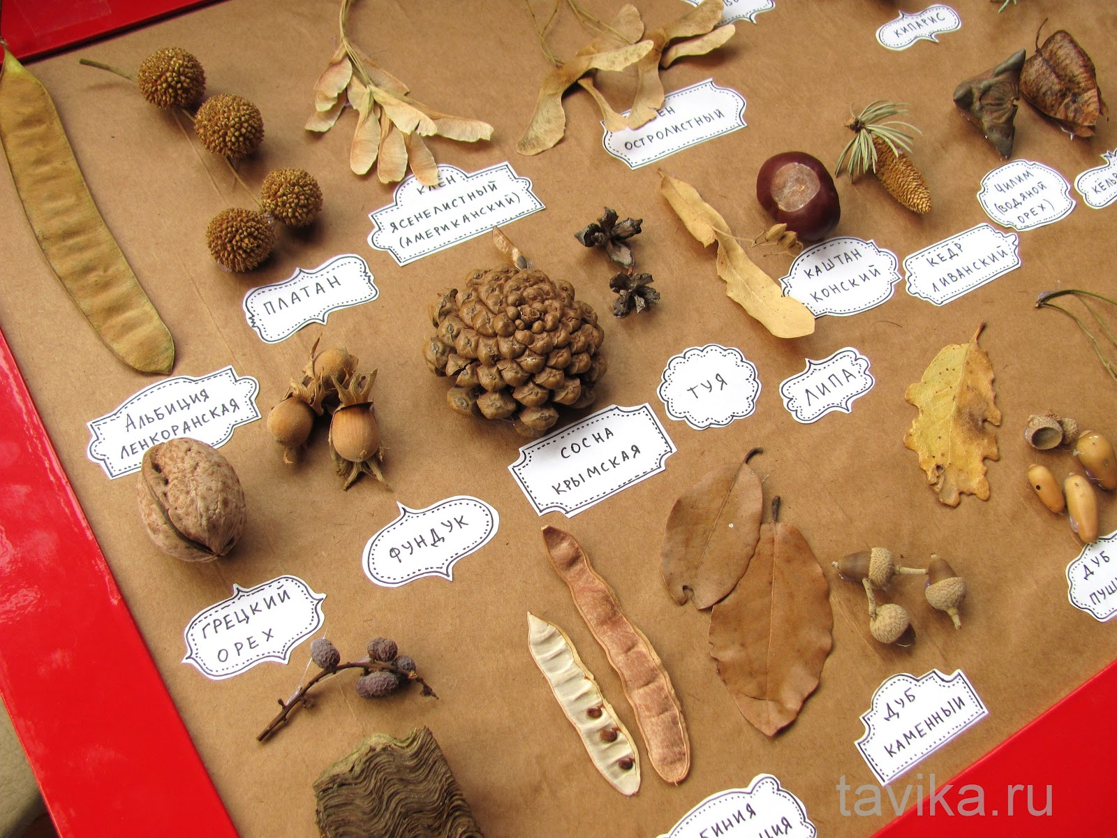Как сделать гербарий на 5