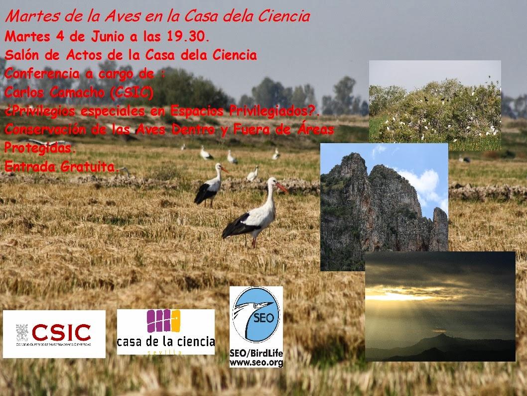 """Conferencia """"¿Privilegios especiales en espacios privilegiados?. Conservación de las aves dentro y fuera de áreas protegidas"""", por Carlos Camacho, que el Grupo Local SEO-Sevilla de SEO/BirdLife organiza en el Museo Casa de la Ciencia de Sevilla"""