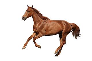 complements alimentaires cheval de course