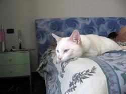 Kimba,nato il 6/3/2009