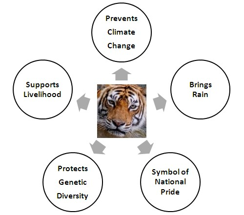 Essay on tigers extinction