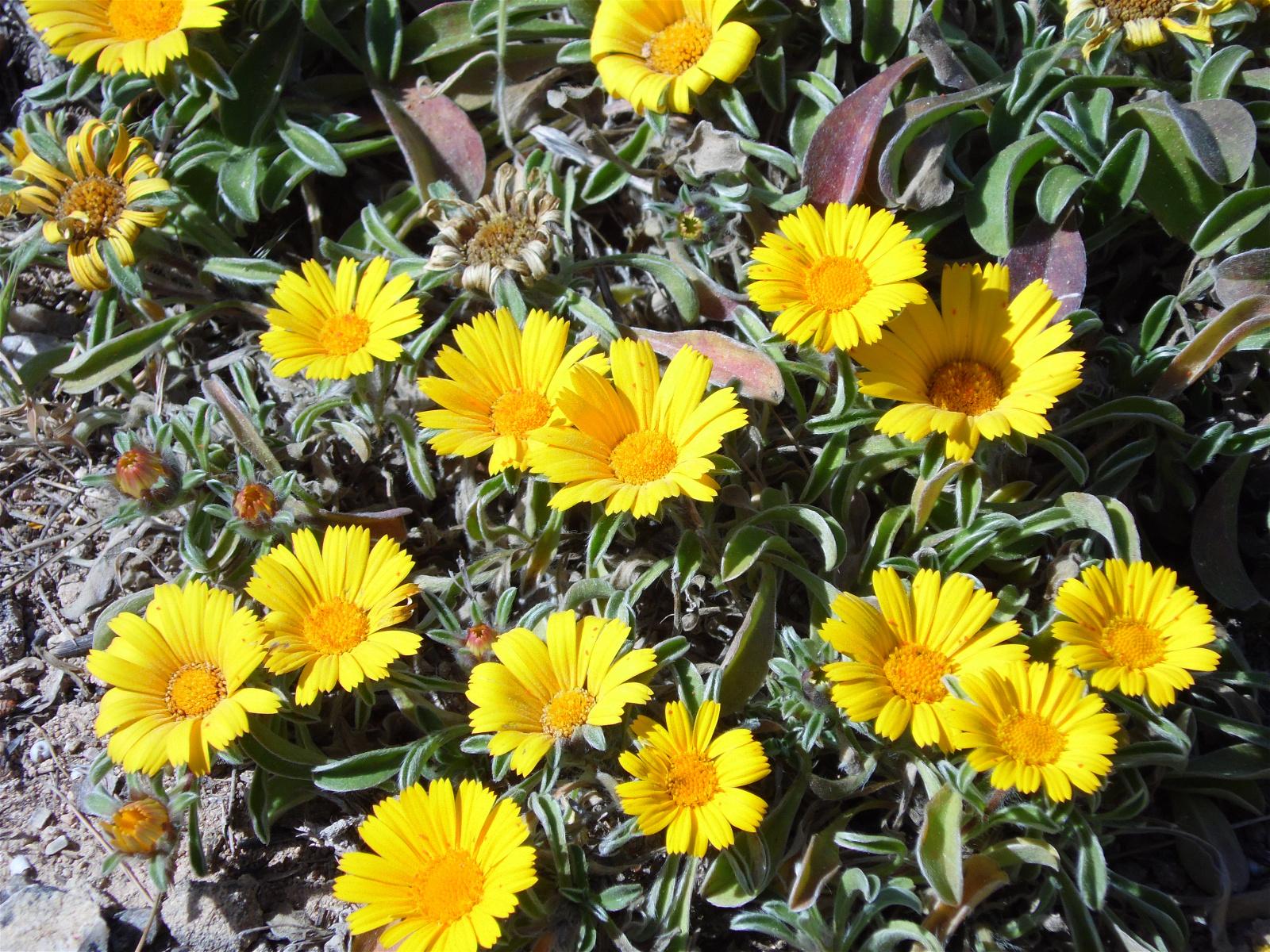 Random Jottings Flora