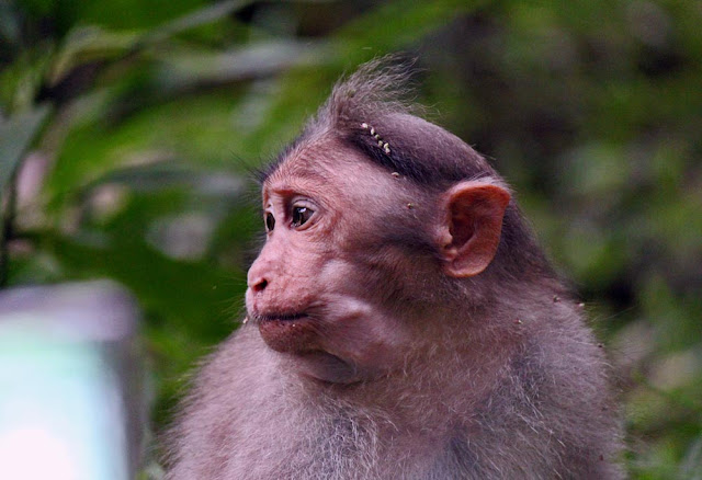 monkey profile   /></a></div><br /> <br /> <div class=