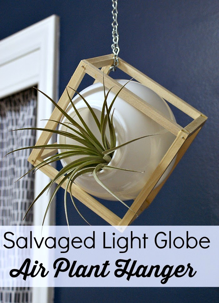 DIY upcycled light globe air plant hanger