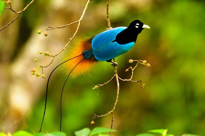 Aves exoticas del Amazonas y del Mundo: Curiosas, raras, extrañas y sorprendentes.