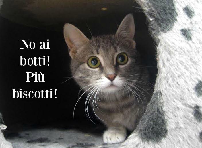 Rumore di fusa botti di san silvestro consigli di - Gatto solo in casa per 15 giorni ...