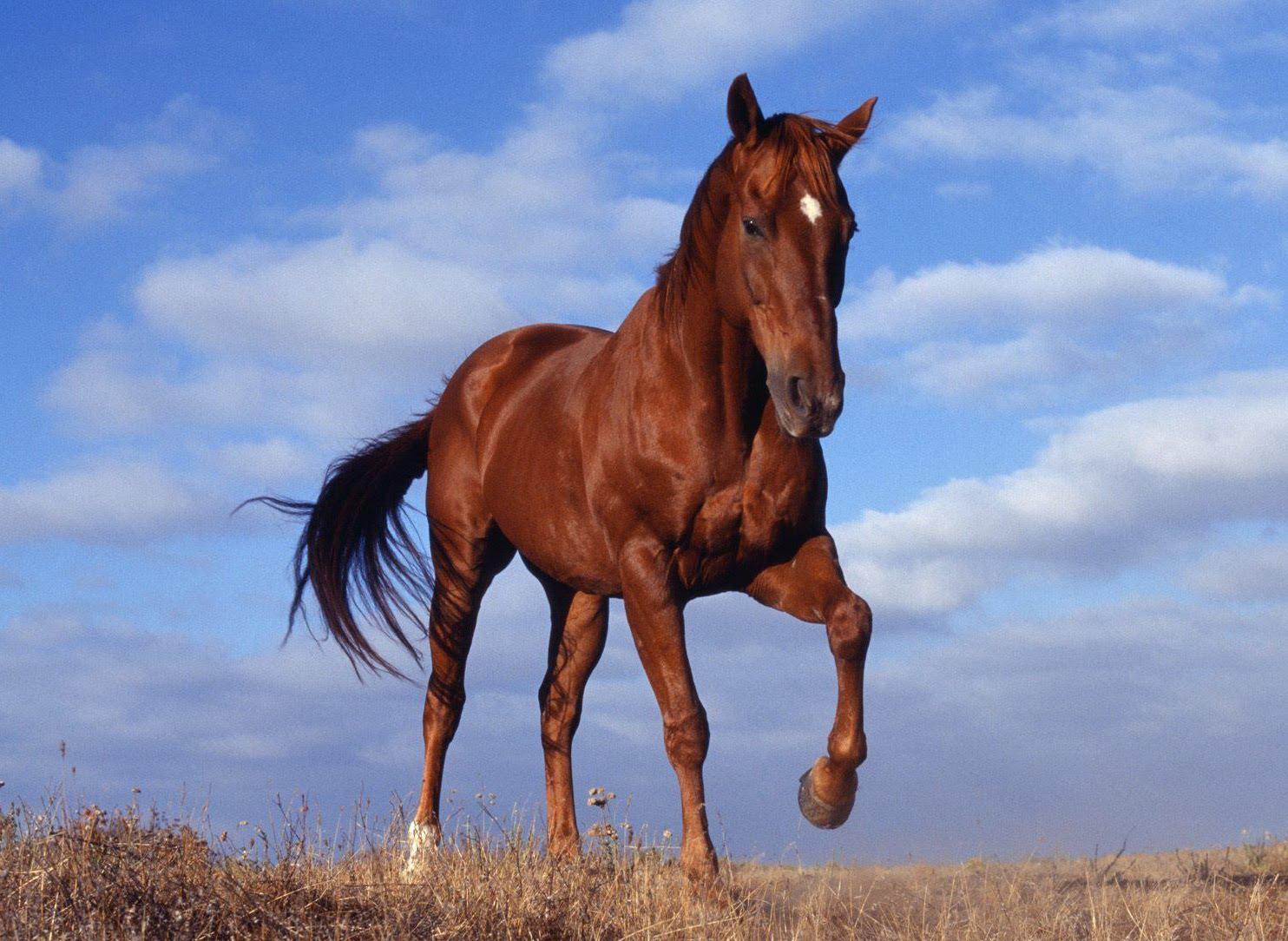 PSICOLMASCOT: Como seleccionar un caballo