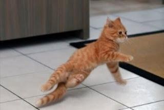 Gato a dançar Breakdance