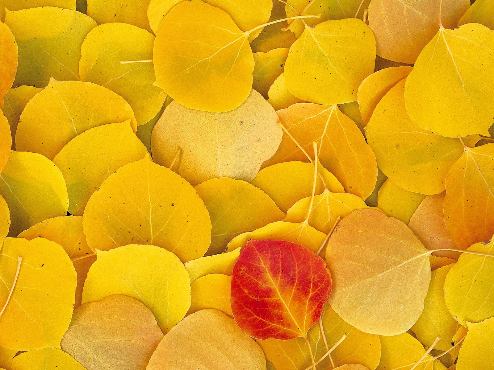 The best top autumn desktop wallpapers 36 En Güzel Sonbahar HD Duvar Kağıtları