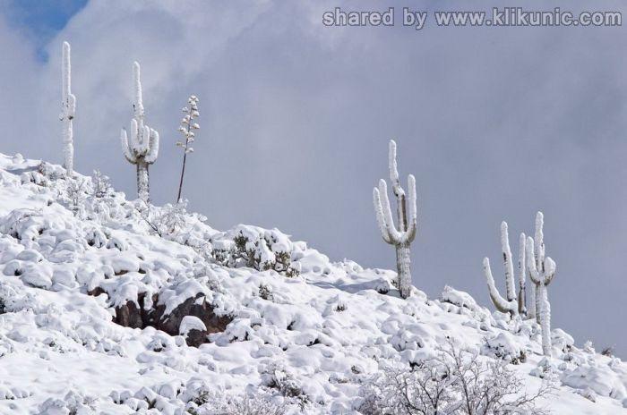 http://4.bp.blogspot.com/-Cm4CRrETVXw/TXVxxH24pNI/AAAAAAAAQDc/81MzHoWuf9I/s1600/winter_28.jpg