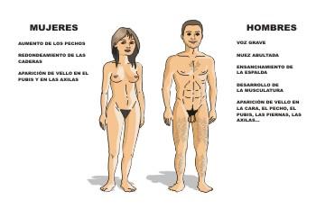 Caracteres sexuale primarios y secundarios en la adolescencia