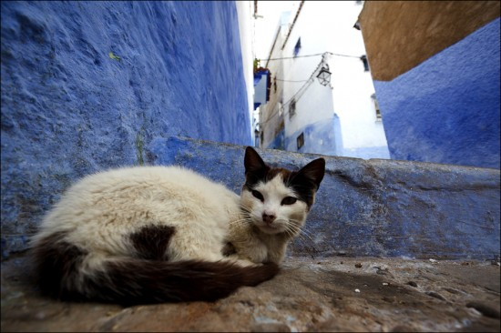 Chefchaouen – The Blue City of Morocco | Top Most Popular Tourist Destinations