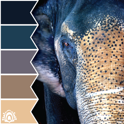 Asian elephant color palette p stel feather studio for Oriental colour palette