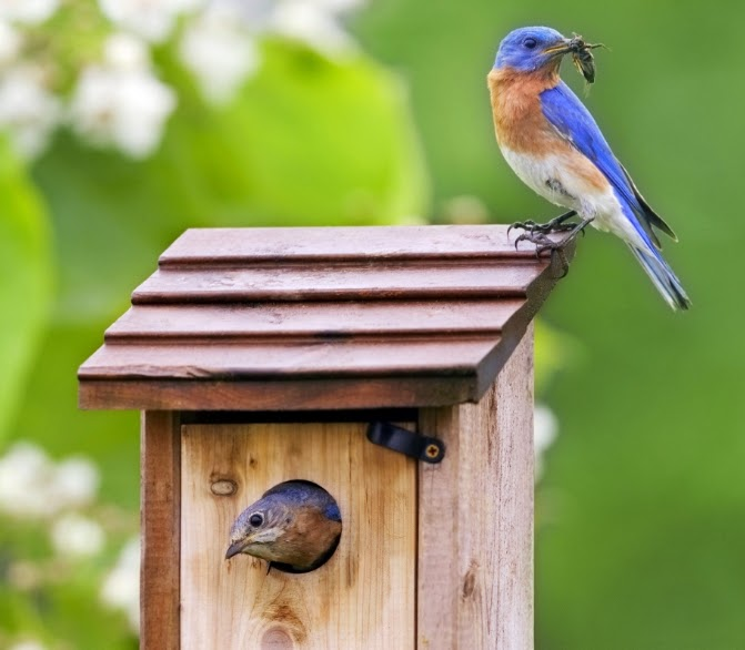 Pájaros que alimentan a los alimentadores de colibríes