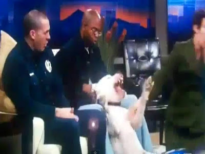 Kyle Dyer: veteran Denver TV news anchor attacked by dog live on air
