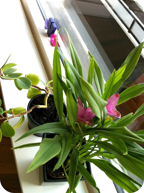 Nyt liv i stuen #1: Stueplanter - pralerier