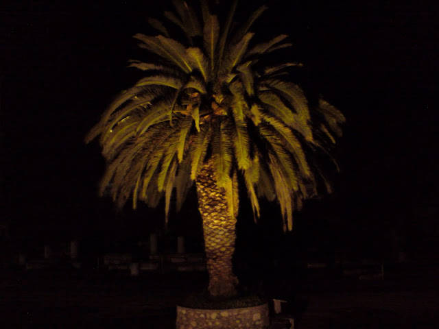 Ancient Agora palm tree
