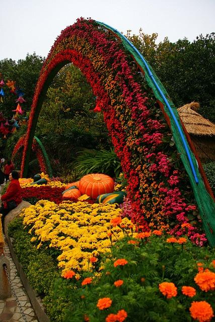 Xardinnova jardines llenos de color for Jardin 7 colores bernal