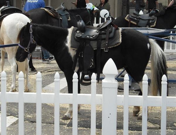 Solano Stroll pony ride