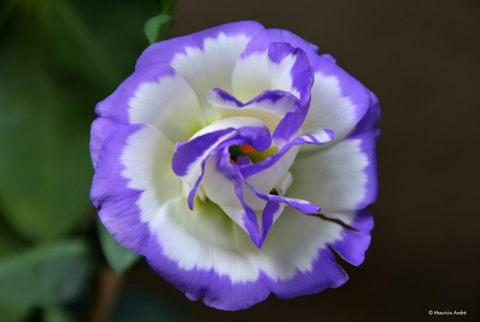 flor do jardim tiete:Terra, Céu e Mar: A MAIS LINDA FLOR