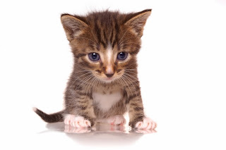 cat medications and supplies