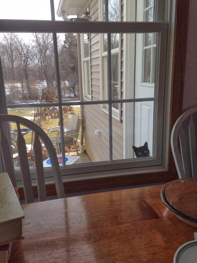 Funny cats - part 91 (40 pics + 10 gifs), cat peeking from window