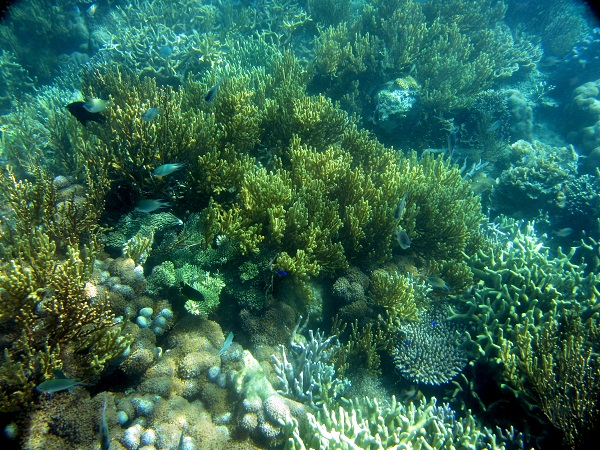 Palawan Place Coral Garden Coral Reef And Fish