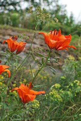 Muonamiehen mökki - Kivikkopiha kukkii