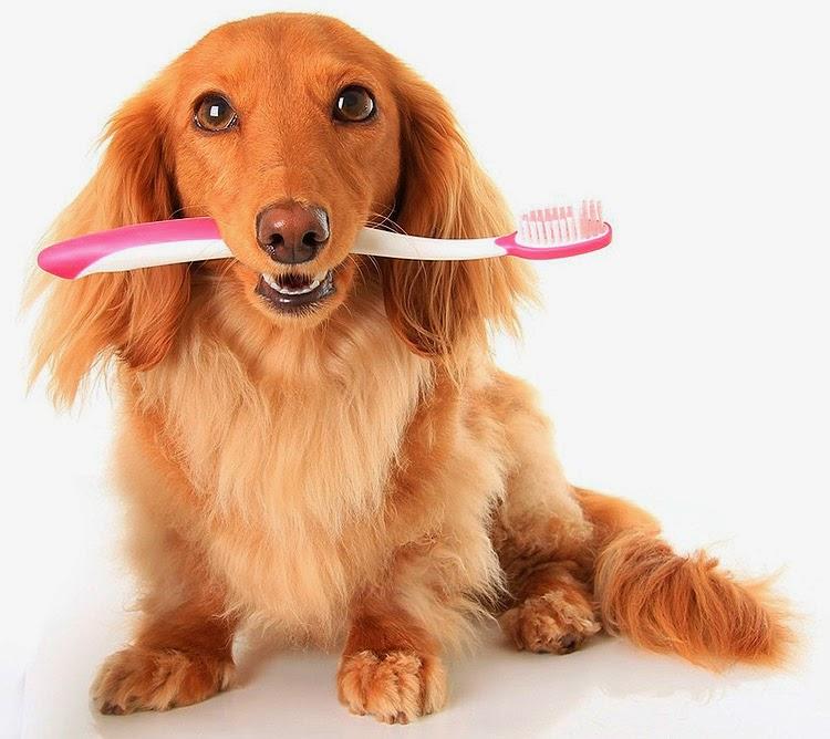 Cuide dos dentes do seu pet