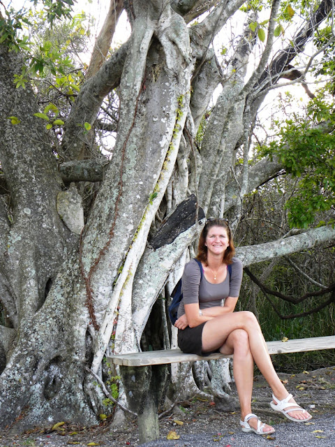 Royal Palm Everglades