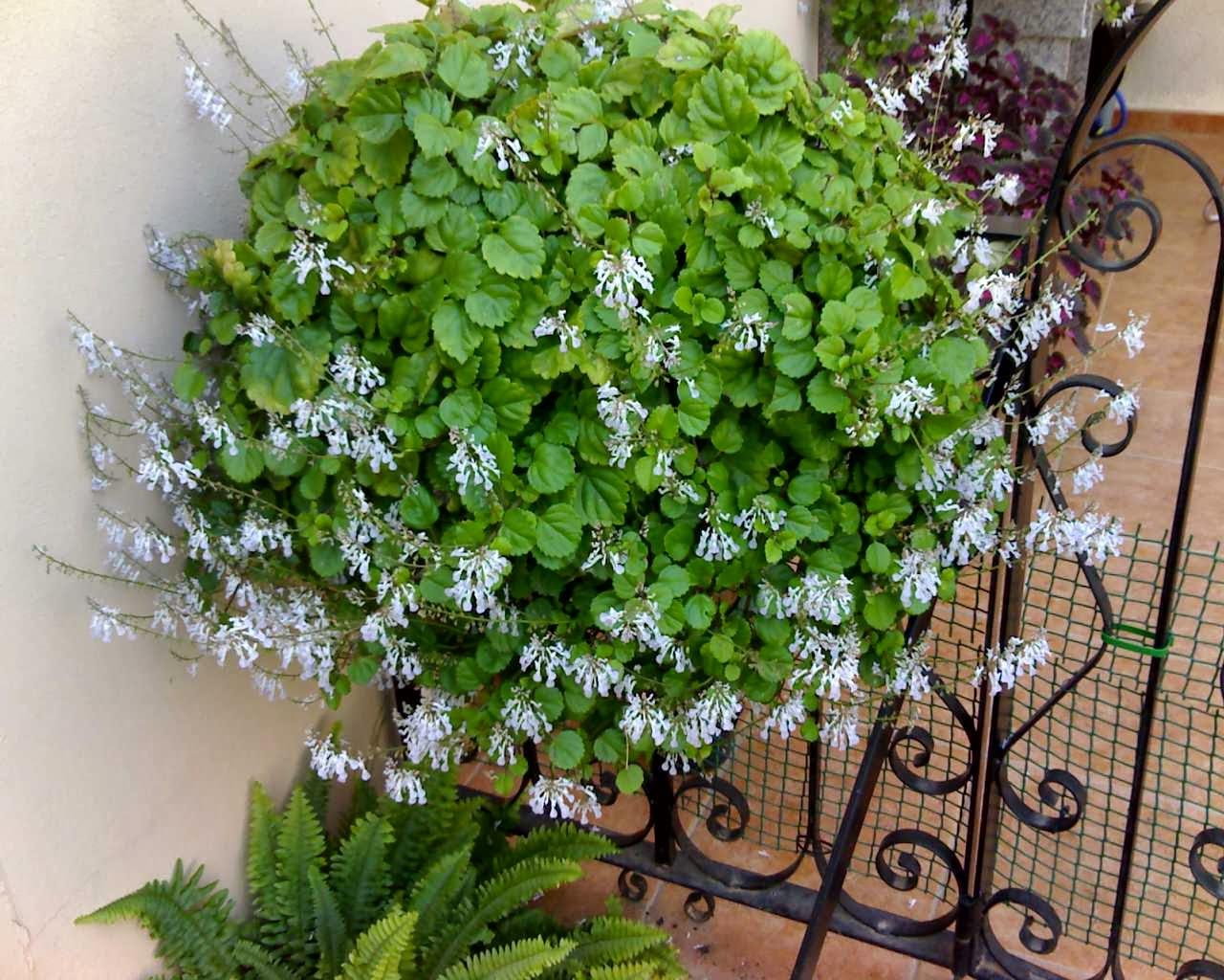Esencia del ser plantas para atraer el dinero - Plantas para atraer el dinero ...