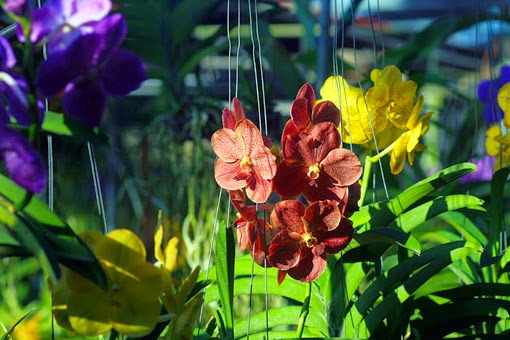 Thailand orchid nursery
