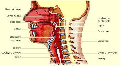 gola secca e difficoltà a deglutire