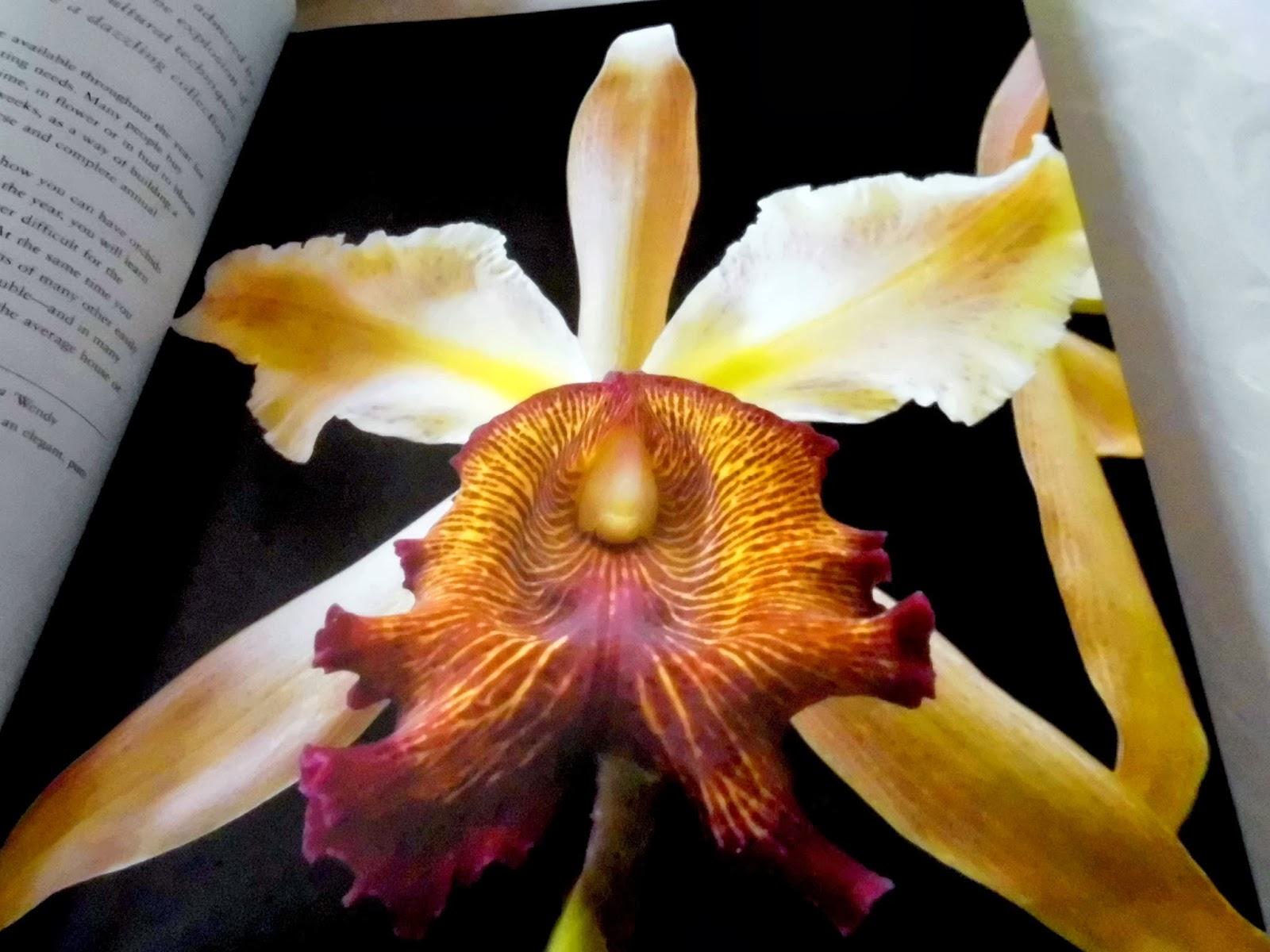 mi libro de orquideas