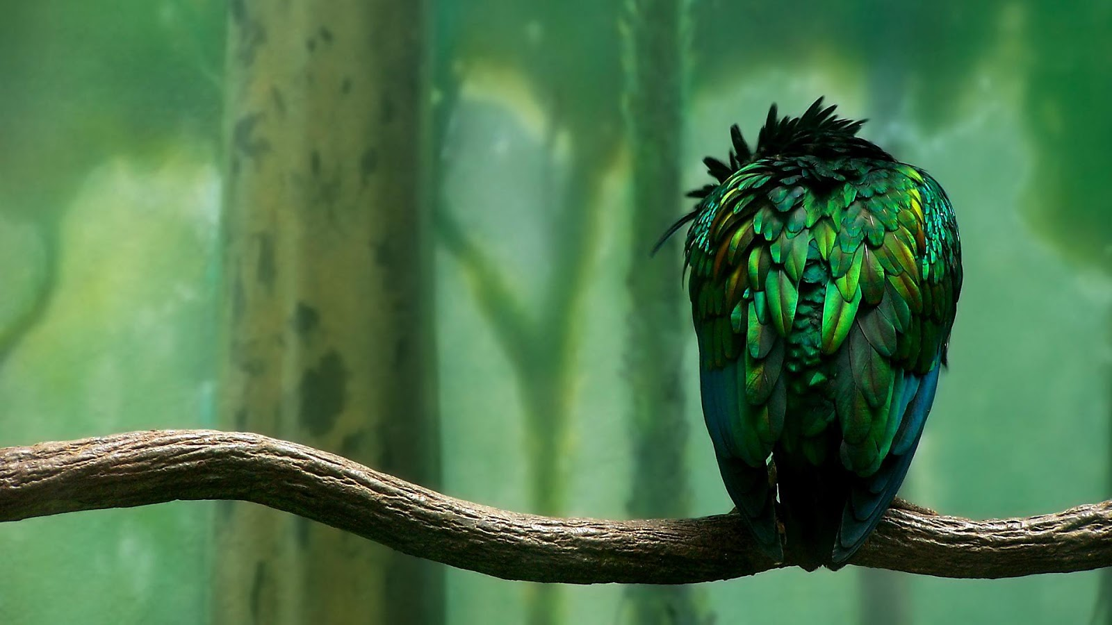free parrot computer wallpapers
