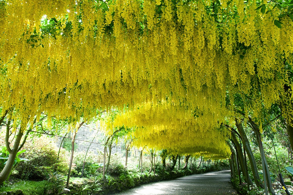 Pleasing Phils Photographic Adventures World Famous Laburnum Arch At  With Excellent Time For A Quick Walk Around The Garden To See If Can See Any Bugs To Shoot   The Bearded Iris Are Looking Fabulous With Breathtaking Spalding Garden Also Piccadily Gardens Manchester In Addition In The Night Garden Book And  Long Acre Covent Garden As Well As Garden On Line Additionally Garden Tool Stores From Goldenorfephotographyblogspotcom With   Excellent Phils Photographic Adventures World Famous Laburnum Arch At  With Breathtaking Time For A Quick Walk Around The Garden To See If Can See Any Bugs To Shoot   The Bearded Iris Are Looking Fabulous And Pleasing Spalding Garden Also Piccadily Gardens Manchester In Addition In The Night Garden Book From Goldenorfephotographyblogspotcom