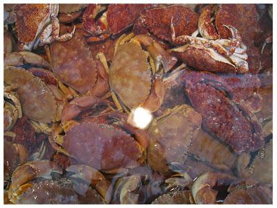 Quality Seafood Santa Barbara Crabs