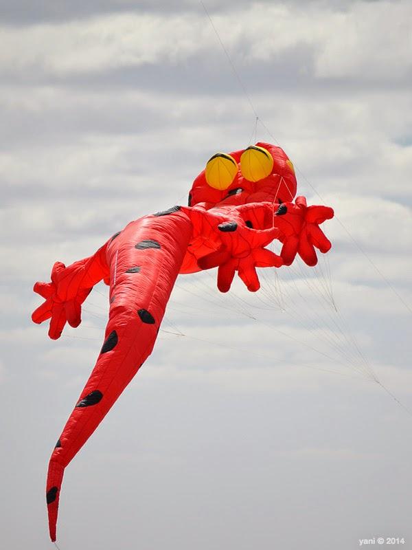 red gekko