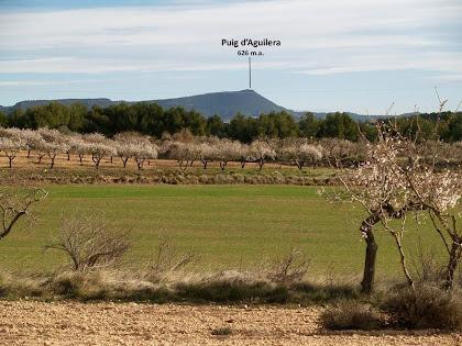 La Plana dels Ametllers amb el Puig d'Aguilera al fons i a llevant del camí