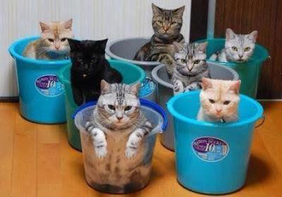 Foto gatos en baldes