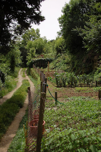 Countryside road and vegetable garden in Montalcino