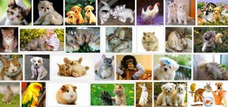 Contoh Deskripsi Hewan dan Gambarnya