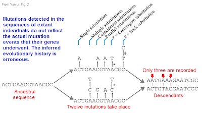 missing mutations