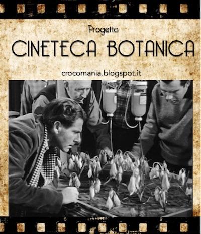 Cineteca Botanica