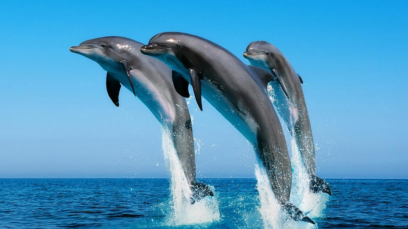 Dolphin Wallpapers | HD Wallpapers | Desktop Wallapers ...