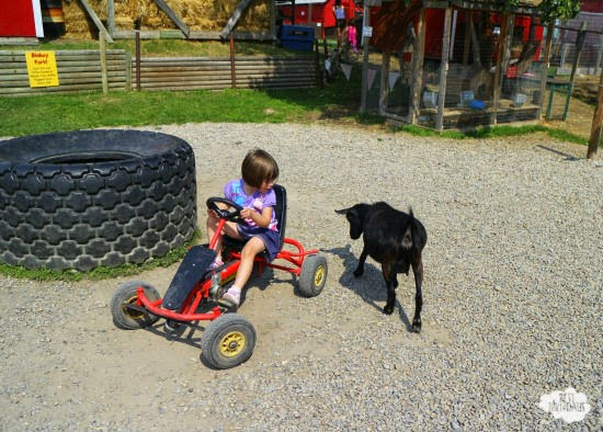 Farm Parties at Butterfield Acres  |  Best Birthdays